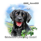 Howard, REALISTIC ANIMALS, REALISTISCHE TIERE, ANIMALES REALISTICOS, paintings+++++Black Labrador,GBHRPROV209,#a#, EVERYDAY ,selfies