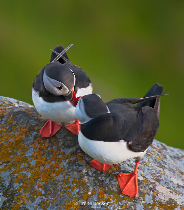 Let me touch you for a while<br />