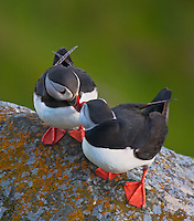 Birds in Norway