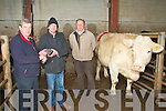 CHAMP: Pat Hussey of Atlantic Oils, Ardfert presenting Michael Dillane, Lixnaw owner of the winner of the Best Fat Cow at the Annual Fatstock show at the Kingdom Mart on Monday l-r: Pat Hussey, Michael Dillane and Brian Walsh chairman of the Kingdom Mart.