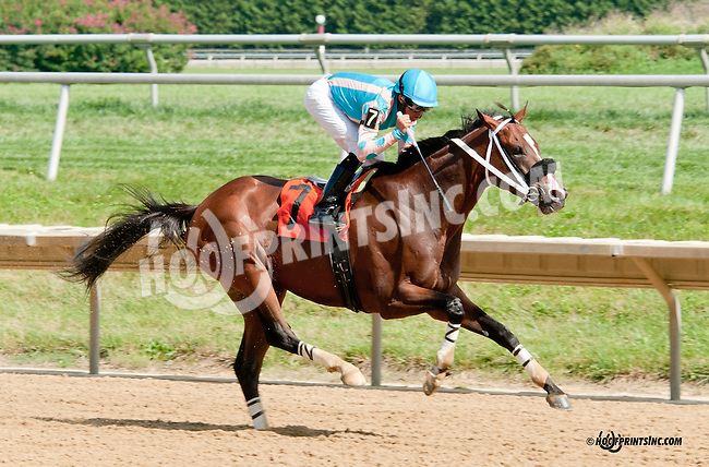 Modern Cowboy winning at Delaware Park on 8/10/13