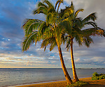 Kauai, Hawaii<br /> Two palm trees in evening light frame a stretch of Anini beach on the north shore of Kauai