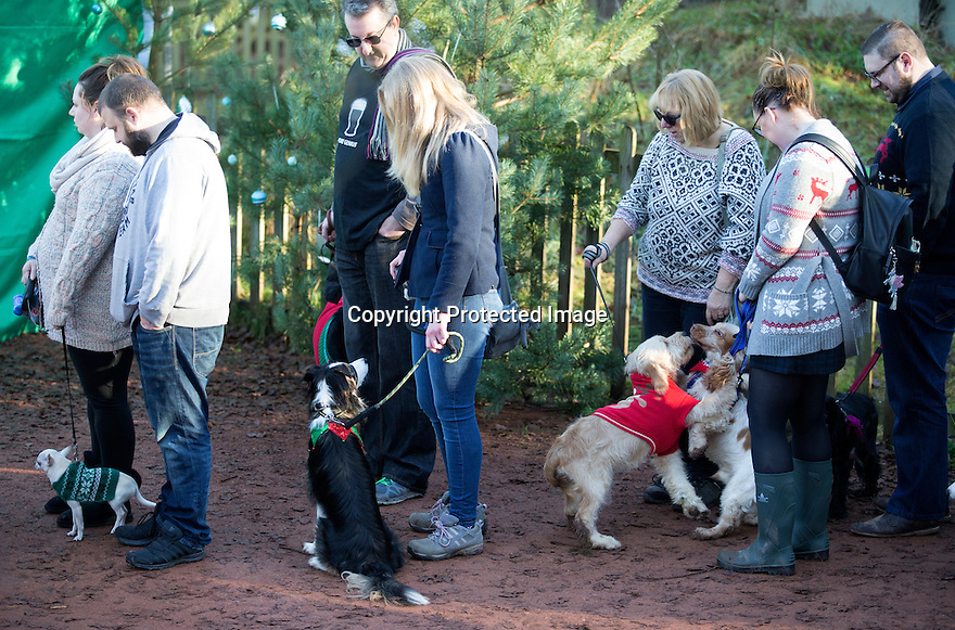 """18/12/16<br /> <br /> Chihuahua Hudson, Collie Lilly, Golden Retriever cross Maddie, and Cocker Spaniel Caleb.<br /> <br /> Close to 800 dogs, many of them dressed up in festive garb, have visited their very own Santa Paws in a special dog-only Christmas grotto held in Sherwood Forest in Nottinghamshire this weekend.<br /> The two-day event, which was organised by park rangers working for Nottinghamshire County Council, has been running for three years.<br /> Ranger Graeme Turner, who originally came up with the idea for a doggy-themed Santa's Grotto said this year has been the best so far.<br /> """"The queue is huge, it snakes back all the way round the visitor's centre,"""" he said. """"All the dogs are being very well behaved, I guess they don't want to get onto Santa Paw's naughty list this close to Christmas!""""<br /> All canine visitors to the grotto got a special doggy bag full of treats and money raised from the event will go to Jerry Green Dog Rescue charity.<br /> <br /> All Rights Reserved F Stop Press Ltd. (0)1773 550665   www.fstoppress.com"""