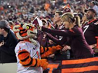 Blacksburg, VA - SEPT 30, 2017: Clemson Tigers mascot interacts with Virginia Tech Hokies fans during game between Clemson and Virginia Tech at Lane Stadium/Worsham Field Blacksburg, VA. (Photo by Phil Peters/Media Images International)
