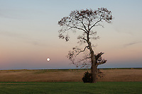 Full Moon &amp; The Mattituck Oak<br />