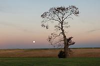Full Moon &amp; The Mattituck Oak<br /> Mattituck, Long Island