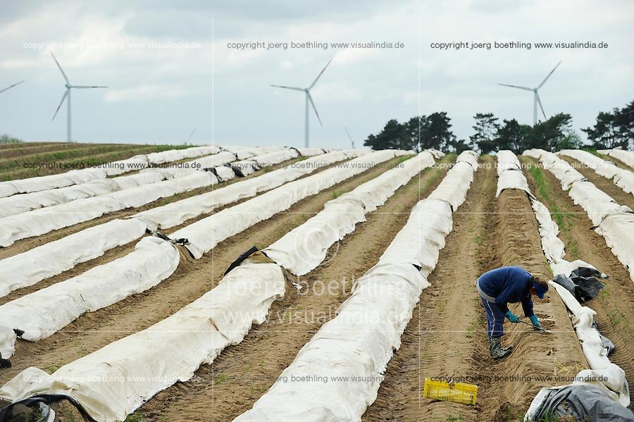 Germany, saisonal worker from eastern europe harvest asparagus in front of wind farm / Deutschland Windpark Plauerhagen, saisonale Arbeitskraefte aus Osteuropa bei Spargelernte vor Windkraftanlagen der Stadtwerke Mannheim MVV