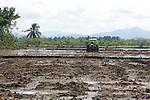 Rice Field, Los Haitises