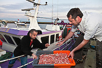 Europe/France/Bretagne/29/Finistère/Guilvinec:  Michaël Renard chef de l' Hôtel de la Plage à Sainte-Anne-la-Palud , choisit ses langoustines au retour des bateaux au port de pèche du Guilvinec [Non destiné à un usage publicitaire - Not intended for an advertising use]