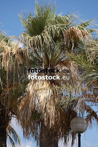 palm tree | palmera | Palme<br /> <br /> 3008 x 2000 px<br /> 150 dpi: 50,94 x 33,87 cm<br /> 300 dpi: 25,47 x 16,93 cm