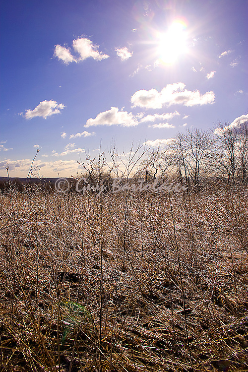 Field of Ice