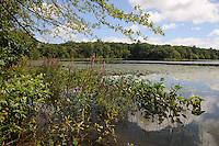 New England Ponds