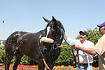 27 June 2009: Zenyatta wins the Vanity Handicap (GI) at Hollywood Park in Inglewood, CA