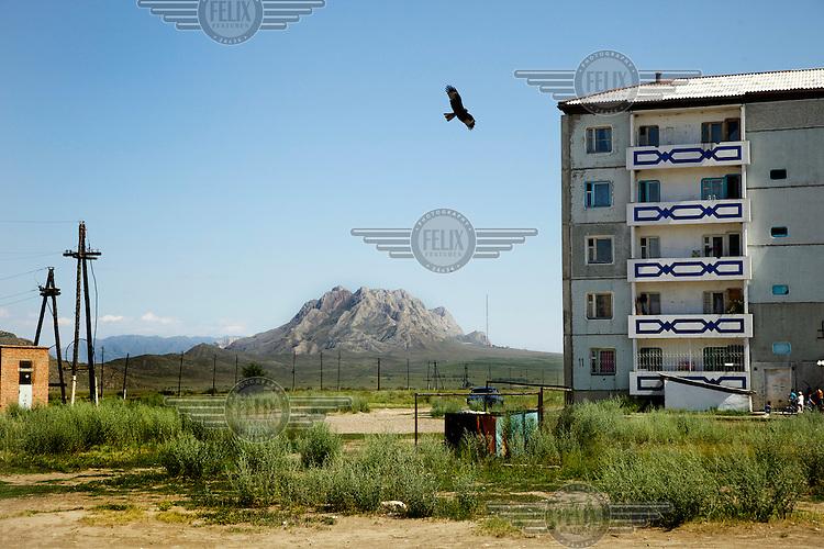 A bird of prey flies near an apartment block in the town of Shagana.