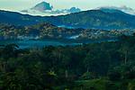 Semi-deciduous tropical moist rainforest, Mamoni Valley, Panama