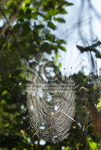 Aldeia Baú, Para State, Brazil. A spider web catches the sunlight.