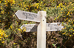 Wooden signpost for three restricted byway paths next to yellow flowers of common gorse bush, Shottisham, Suffolk, England