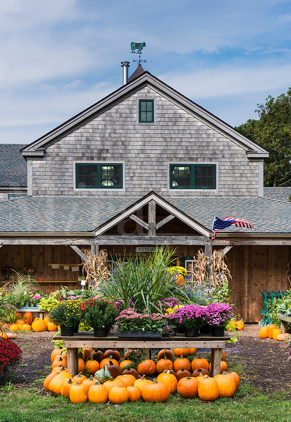 Autumn display, Morning Glory Farm stand, Edgartown, Martha's Vineyard, Massachusetts, USA.