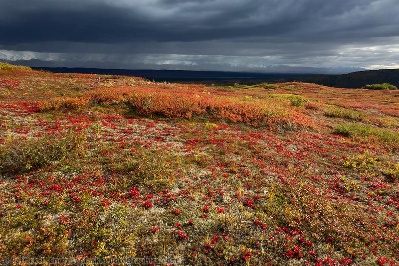 Stormy clouds over the Alaska Range mountains, Denali National Park, Interior, Alaska.