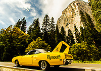 Superbird At Yosemite