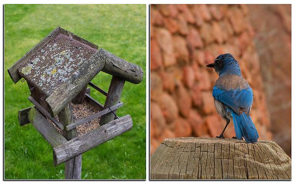 Birdfeeder and Mountain Bluebird. .  John leads private, wildlife photo tours throughout Colorado. Year-round.