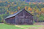 A tobacco barn sits below colorful Russell Hill during Autumn in Sunderland, Massachusetts