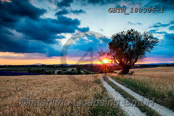 Tom Mackie, LANDSCAPES, LANDSCHAFTEN, PAISAJES, photos,+Europa, Europe, European, France, Plateau de Valensole, Provence, Tom Mackie, country lane, dramatic outdoors, french, horizo+ntal, horizontals, lane, mood, moody, path, pathways, scenic, sunrise, sunrises, sunset, sunsets, time of day, track,Europa,+Europe, European, France, Plateau de Valensole, Provence, Tom Mackie, country lane, dramatic outdoors, french, horizontal, ho+rizontals, lane, mood, moody, path, pathways, scenic, sunrise, sunrises, sunset, sunsets, time of day, track+,GBTM180305-1,#l#, EVERYDAY