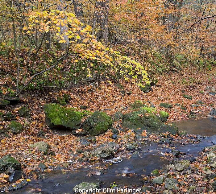 Pine Hollow Creek, White Pine Hollow State Preserve, Dubuque County, Iowa