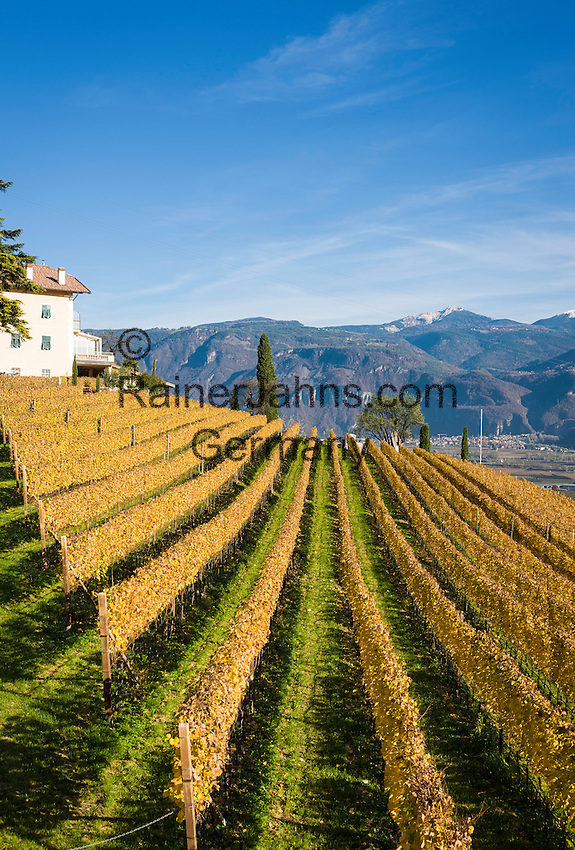 Italy, Alto Adige - Trentino (South Tyrol), Termeno sulla strada del vino: famous wine growing region, country of the Gewuerztraminer | Italien, Suedtirol, suedlich von Bozen, Tramin an der Weinstrasse: beruehmte Weinbauregion, Land des Gewuerztraminers
