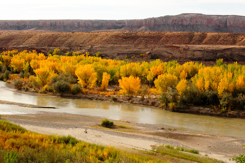 This photo was taken near Sand Island on the San Juan river south of Bluff, Utah. The red hills contrast nicely with the yellow and green colors of the trees.