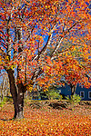 Fall foliage in Weathersfield, VT, USA