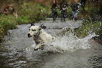 FAO JANET TOMLINSON, DAILY MAIL PICTURE DESK<br />Pictured: A dog is splashing about in a stream Wednesday 23 November 2016<br />Re: The Dog House in the village of Talog, Carmarthenshire, Wales, UK
