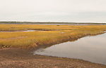 Salt water marsh