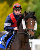 Regular Income ridden by Adam Beschizza goes down to the start of The PKF Francis Clark EBF Novice Stakes        during Afternoon Racing at Salisbury Racecourse on 4th October 2017
