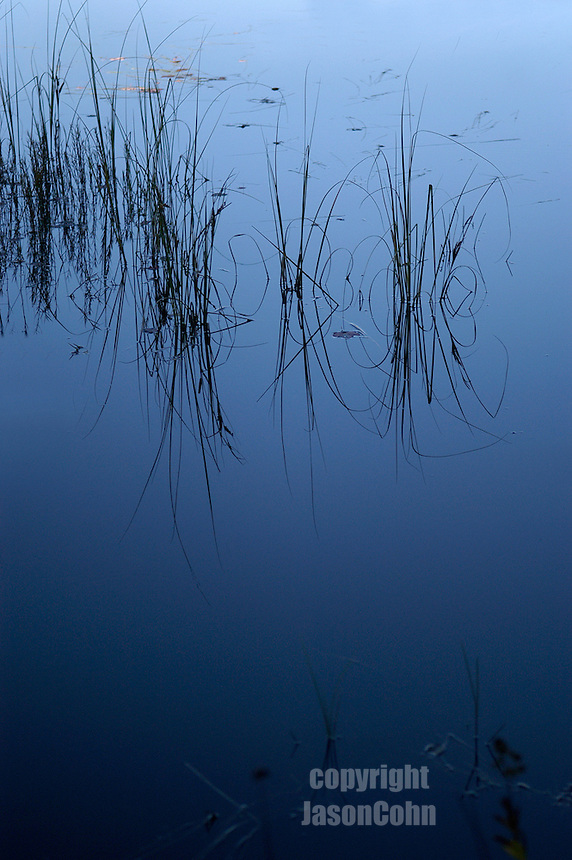 Lake grass in the Adirondacks. Photo by Jason Cohn