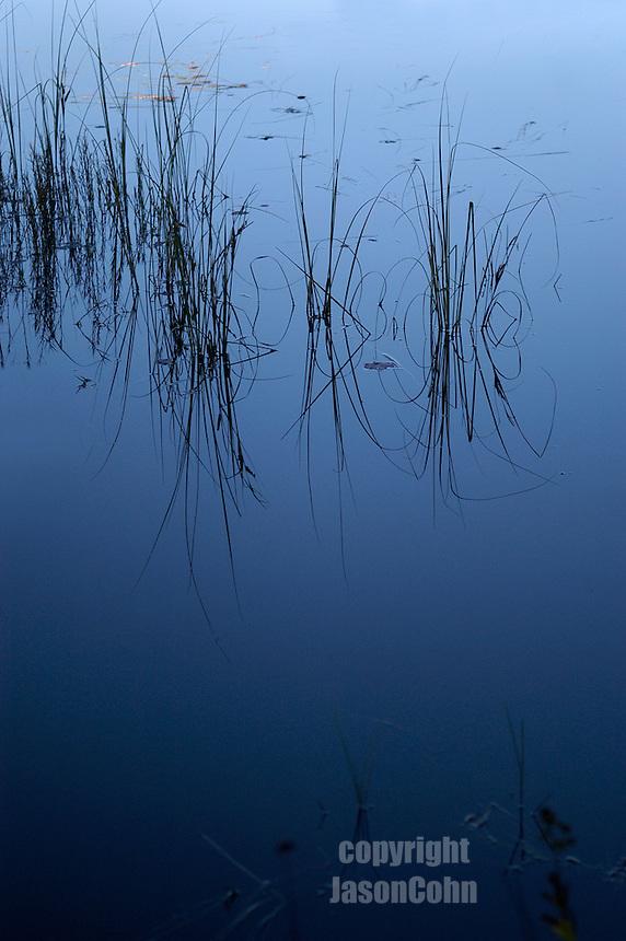 Lake grass in the Adirondacks. Photo by Jason Cohn