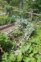 Raised vegetable beds made from cinderblocks, planted with lettuces in the holes, with brassicas broccoli, rhubarb, onions,