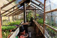 France, Manche (50), Vauville, Jardin botanique du château de Vauville, serre de multiplication