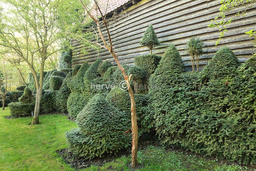 Jardin de la Ferme du Mont des Récollets, ifs taillé le long d'un hangar bardé de bois // France, garden of Ferme du Mont des Récollets, yews carved along a shed