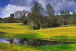 Spring in the San Antonio Valley, Santa Clara County, California