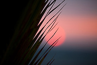 Close up of palm leaves at sunset
