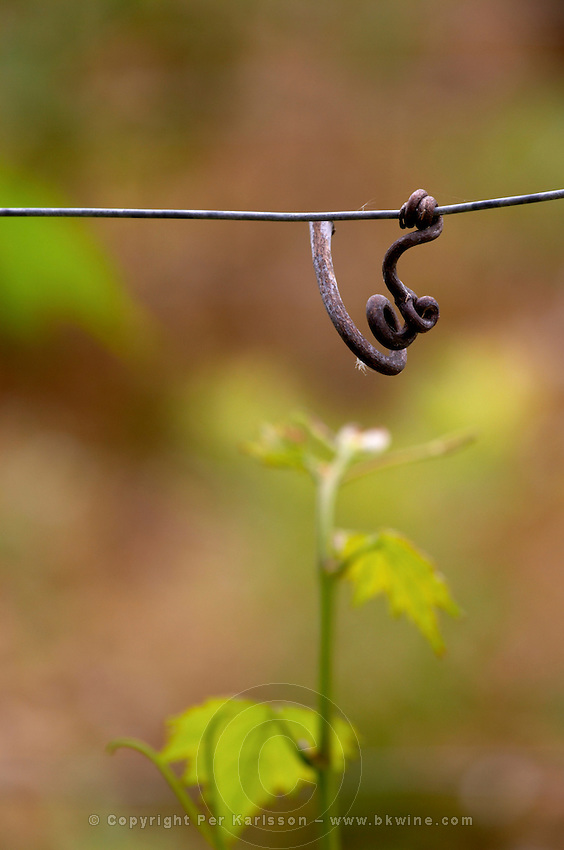 metal wire with old twigs dom g amiot & f chassagne-montrachet cote de beaune burgundy france