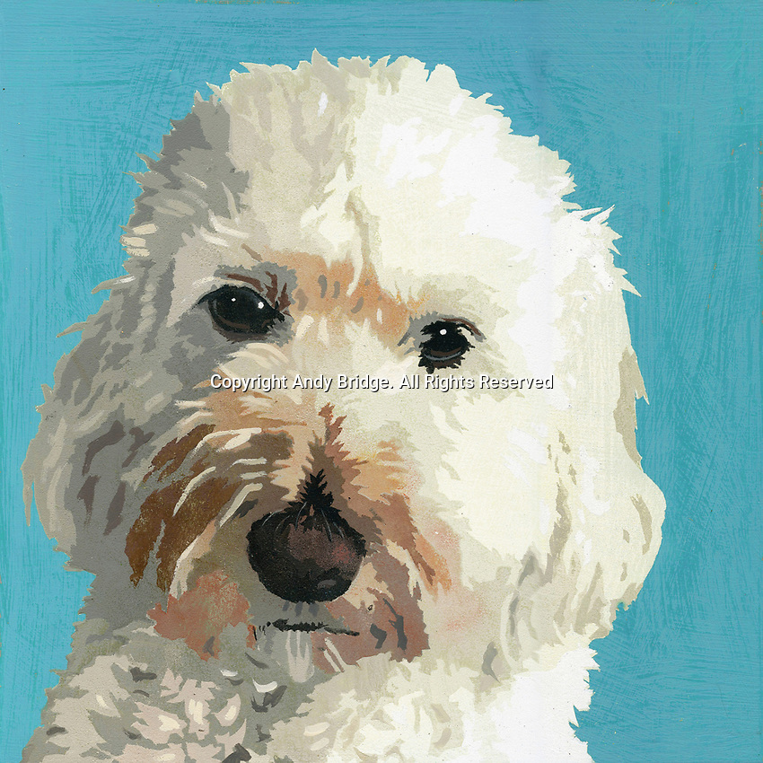 Painting of Cockapoo dog