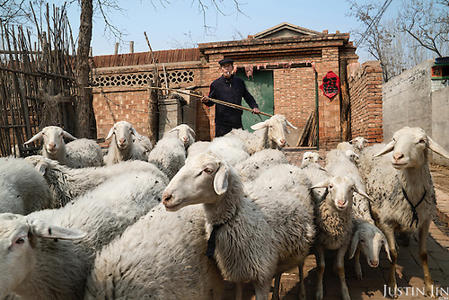 A farmer shepherds his sheep in Hebei, on the outskirts of Beijing, where rural land is increasingly destroyed to make way for urbanisation. <br /> <br /> <br /> China is pushing ahead with a dramatic, history-making plan to move 100 million rural residents into towns and cities over six years &mdash; but without a clear idea of how to pay for the gargantuan undertaking or whether the farmers involved want to move.<br /> <br /> Moving farmers to urban areas is touted as a way of changing China&rsquo;s economic structure, with growth based on domestic demand for products instead of exporting them. In theory, new urbanites mean vast new opportunities for construction firms, public transportation, utilities and appliance makers, and a break from the cycle of farmers consuming only what they produce.<br /> <br /> Urbanization has already proven to be one of the most wrenching changes in China&rsquo;s 35 years of economic reforms. Land disputes rising from urbanization account for tens of thousands of protests each year.