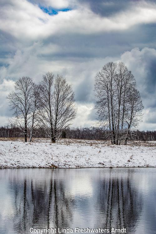 Tree reflecitons