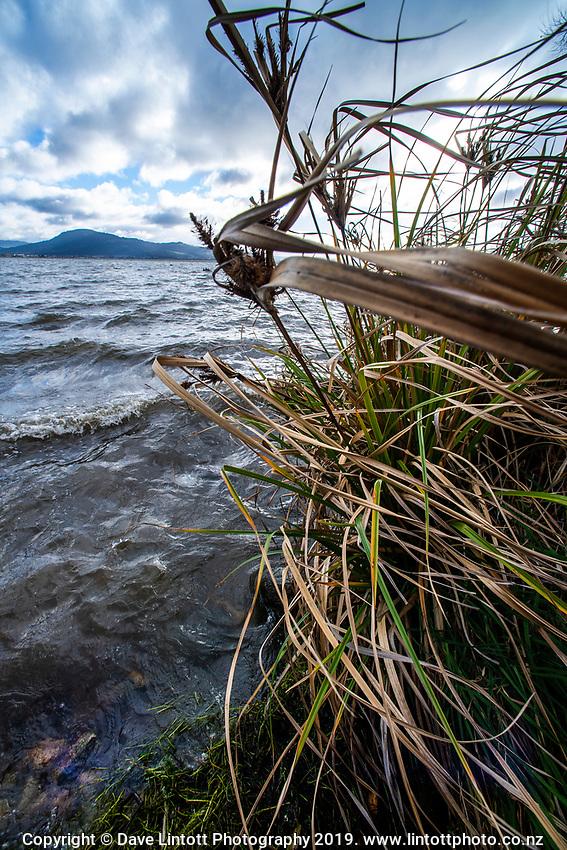 Bay Of Plenty Regional Council in Rotorua, New Zealand on Thursday, 6 June 2019. Photo: Dave Lintott / lintottphoto.co.nz