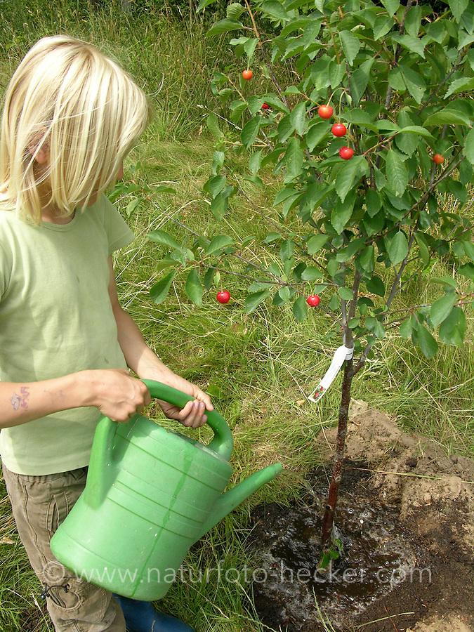 Kind, Junge pflanzt einen Obstbaum, Kirschbaum auf einer Wiese, Streuobstwiese, gießt den neu gepflanzten Baum mit Wasser aus der Gießkanne an