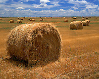 Field of harvested hay rolls on a ranch in eastern Colorado; Lincoln County, CO