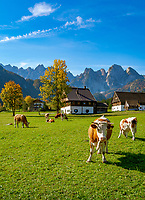Austria, Upper Austria, Salzkammergut, Gosau: Farmhouses below Dachstein mountains | Oesterreich, Oberoesterreich, Salzkammergut, Gosau: Bauernhaeuser am Fusse des Dachsteingebirges