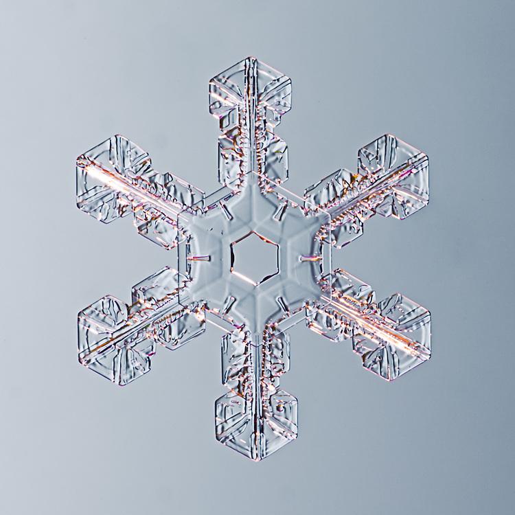 Snowflake Chalcedony - Stellar Plate Snwoflake